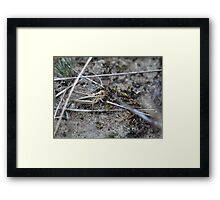 Jumping around in the dunes Framed Print