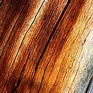 sun wood by yvesrossetti