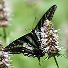 Twin Lakes trail Butterfly by SKNickel