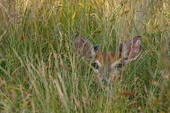 Whitetail Buck Hiding by Joe Elliott