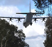 Hercules - Richmond RAAF Base NSW Australia by Phil Woodman