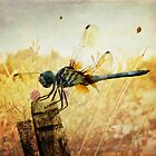 Dragon fly by Rachels  Reflections