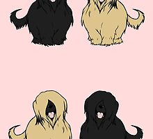 Paired Briards - Fawn and Black by Shukura