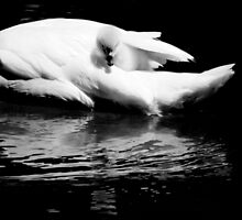 baby swan by Marianna Tankelevich