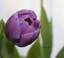 Purple Passion ~ A Tulip Portrait by SummerJade