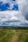 Northumberland National Park - Sheep's View by Nigel Bangert
