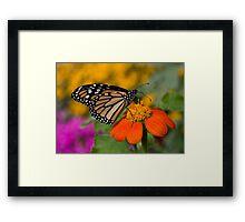 Monarch in the Garden Framed Print