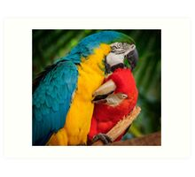 Macaws - Necking Art Print