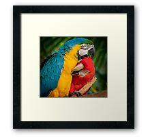 Macaws - Necking Framed Print