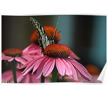 Hello Says the Eastern Tiger Swallowtail  Poster