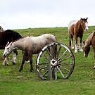 Ace hi Ranch,Rye by Rosina  Lamberti