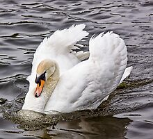 Gliding  by Lynne Morris