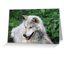 Grisham the Gray Wolf Greeting Card