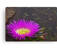 Bloom on Turret Canvas Print