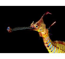 Seadragon Portrait Photographic Print