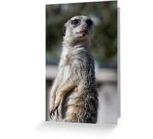 Do I have something on my chin? Meerkat Greeting Card