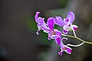 orchid by gary roberts