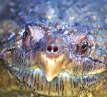 Snapping Turtle by Steve Unwin