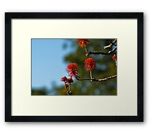 red hot poker tree Framed Print