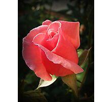 A rose at mybackyard(Turkey). Photographic Print