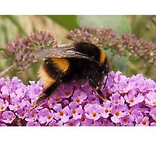 Bumble Bee Moment Photographic Print