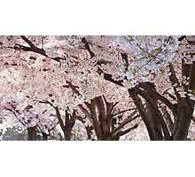 Scented Canopy Photographic Print