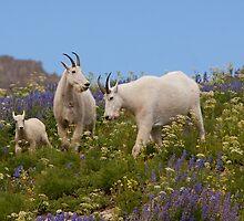 Goat Heaven by Kent Keller