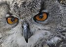 Close up of Eagle Owl by buttonpresser
