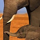 Elephant Mother and Calf, Amboseli National Park, Kenya. Africa. by photosecosse /barbara jones