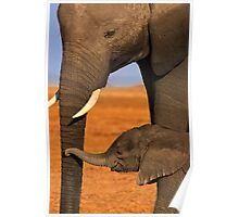 Elephant Mother and Calf, Amboseli National Park, Kenya. Africa. Poster