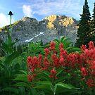 Devil's Castle Wildflowers by Gene Praag