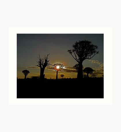 living and dead quiver trees in the setting Namibian sun Art Print