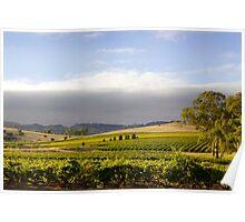 Barossa Valley Landscape Poster