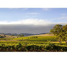 Barossa Valley Landscape Photographic Print