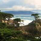 The Lone Cypress by hmoles