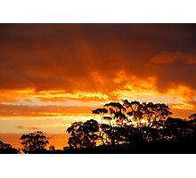 Tree Line Silhouette 2 Photographic Print