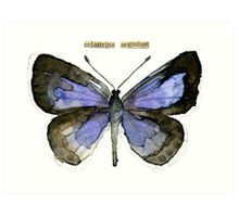 Celastrina argiolus (Holly Blue Butterfly) Art Print