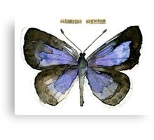 Celastrina argiolus (Holly Blue Butterfly) Canvas Print