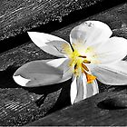 Lonely Flower On A Bench by blueyesdragon