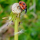 Ladybird by blueyesdragon