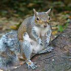 Squirrel Nutkin by blueyesdragon