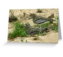 Water thick knee Greeting Card