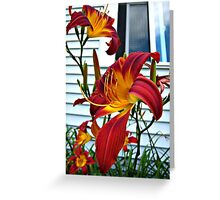 Red and Yellow Daylily in July Greeting Card