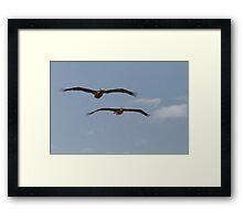 A pair of pelicans in Florida Framed Print