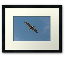 Graceful pelican in Florida Framed Print