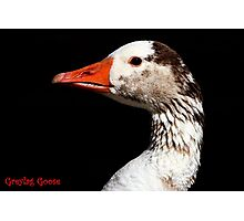 The Greylag Goose Photographic Print
