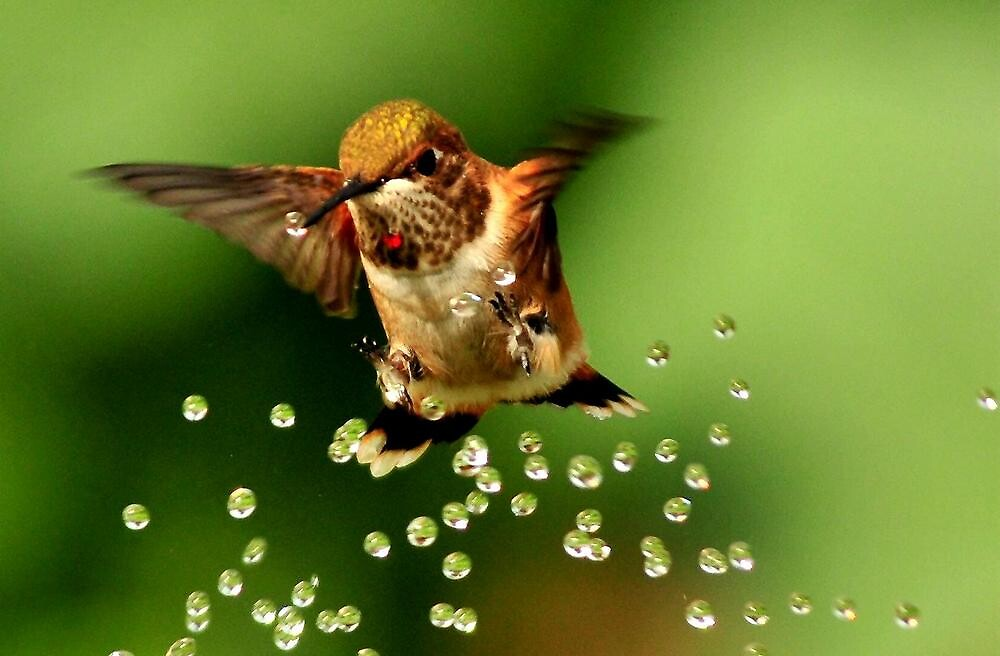 ..TINY BUBBLES ...D by RoseMarie747