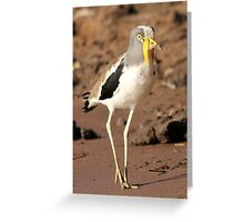 White-crowned Plover Greeting Card