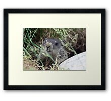 The Baby (Groundhog) Framed Print