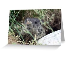 The Baby (Groundhog) Greeting Card